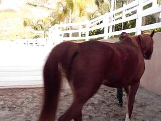 Dani Daniels eats pussy in a stable